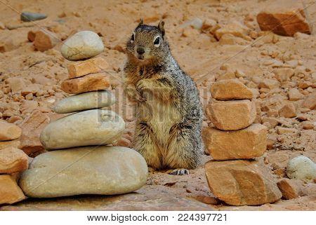Ground Squirrel Sitting Cute Between Cairns In Zions National Park Utah