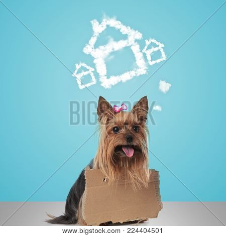 little yorkshire terrier wearing a sign dreams at e new home , pet adoption concept