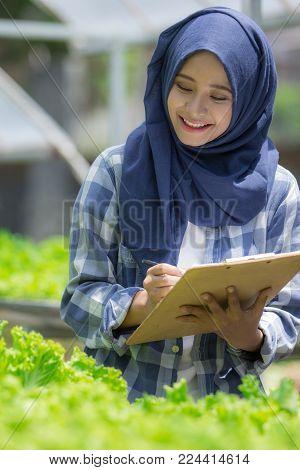 young asian muslim woman working in hydrophonic farm. modern farming