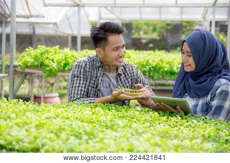 two farmer team looking at young plant in hydrophonic farm. modern farming concept