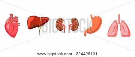 Human organs icon set. Cartoon set of human organs vector icons for web design isolated on white background