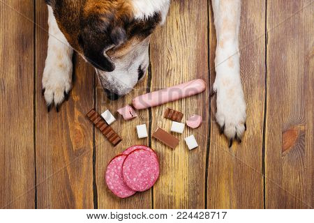 Dogs paws and neb and heap of forbidden dogs meal on wooden background. Unhealthy food for pets concept. Copy space