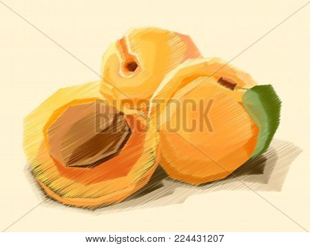 Vector Illustration Graphic Arts Sketch Of Drawing Fruit Apricot With Half.