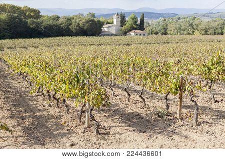 Lanscape with vineyards,Penedes wine cava region,Vilafranca del Penedes,Catalonia,Spain.