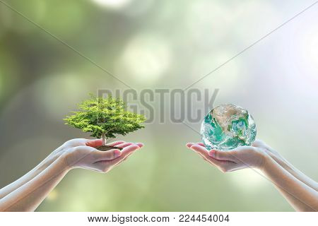 Two people human hands holding/ saving growing big tree on soil eco bio globe in clean CSR ESG natural sunlight background World environment day go green concept Element of the image furnished by NASA