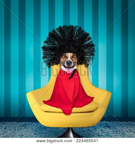 Jack Russell Dog  At The Hairdressers With Long Curly Hair Wig ,  Sitting On A Salon Chair, Cleary A