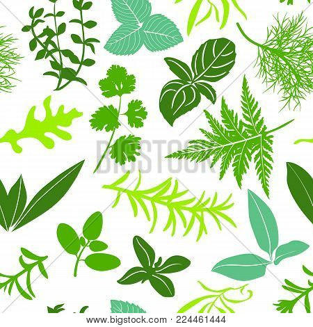 Farm fresh culinary herbs on white seamless pattern vector. Salad mix cooking seasonings. basil, icon, rosemary, mint. arugula, sage, chives, thyme, parsley oregano  For wrappping decoration