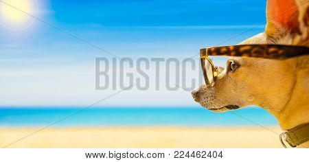 Chihuahua Dog Watching And Looking At The Beach And Ocean Wearing Funny Sunglasses, On Summer Vacati