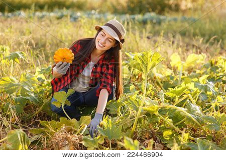 young woman gardener with squash in garden. Young farmer harvesting squash. Gardening, agriculture, autumn harvest concept