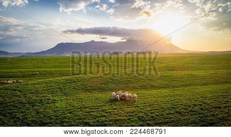 Wide Angle Landscape Image Of A Bright Green Wheat Field In The Swartland Area In The Western Cape O