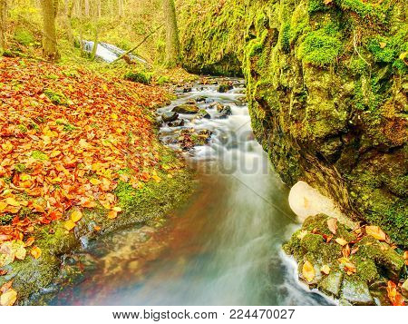 Colorful leaves and foamy rapid stream. Bright autumn colors at stream between mossy whinstone rocks.