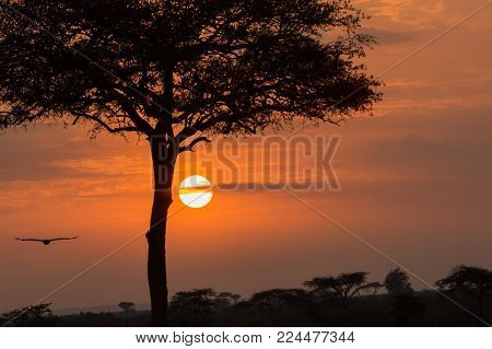 lone tree silhouetted against the sunrise on the Maasai Mara, Kenya