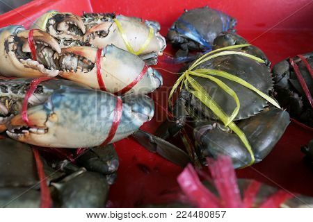 Fresh crabs are tied in a red pickup in the market. Fresh and delicious.the big claws of a crabs. Crabs are suitable for cooking. It is a good raw material. For the restaurant