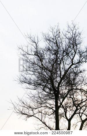 Dead tree branch against blue sky ( Filtered image processed vintage effect. )