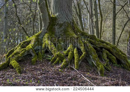 Big roots as a foundation for stability