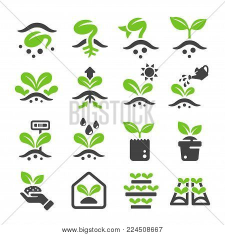 sprout and plantation icon set vector illustration