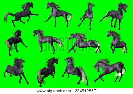 3D rendering of a collection on chroma key background of arabian horse poses