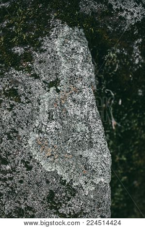 Moss texture and background. Green moss on stone background. Organic texture and background for designers. Closeup of mossy stone background.