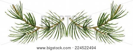 Watercolor embellishment decor element with pine branches. Will be good to use for greeting cards, post cards, lettering, wedding and other invitations, e-mal design etc.