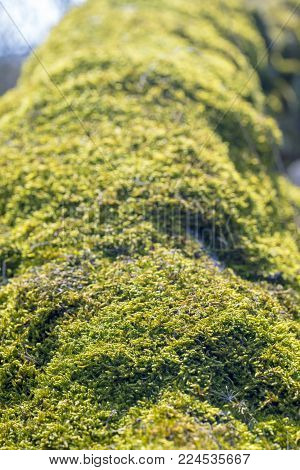 moss on a tree trunk, spring in the forest