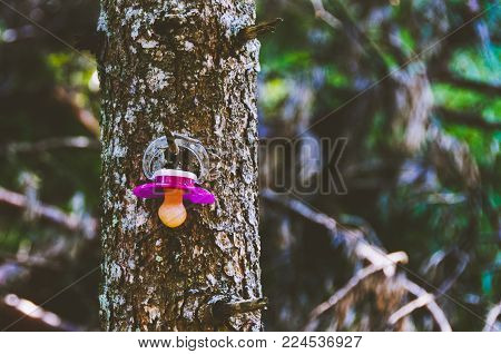 Baby pacifier hanging on a tree up in the mountains
