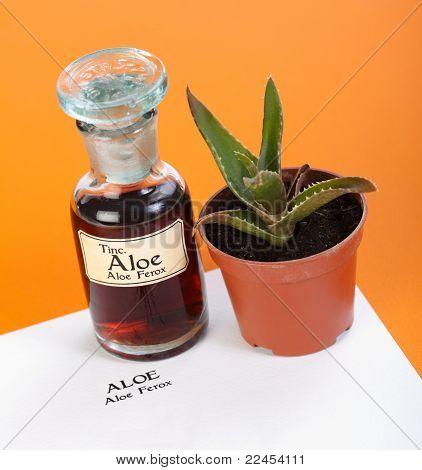 Aloe Ferox Plant, Extract And Sheet