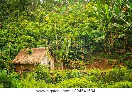 Small Wooden Bamboo Hut In The Jungle On The Indonesian Island Of Flores Nusa Teggara
