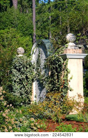 Beautiful White, Lattice And White Pillars Are Covered In White And Green Ivy.  Garden Is The Birmin