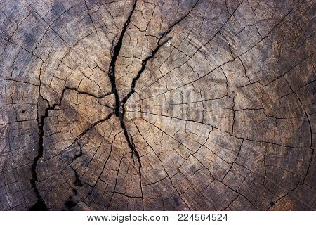 wood tree stump texture background for web and print