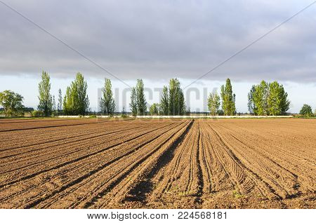 Initial stages of cornfields in the plain of the River Esla, in Leon Province, Spain