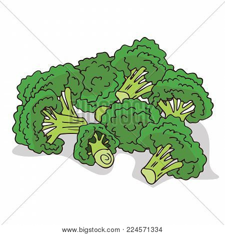 Isolate ripe broccoli stalks on white background. Close up clipart with shadow in flat realistic cartoon style. Hand drawn icon
