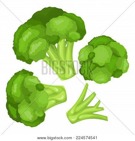 Vitamins and minerals head of a flower of broccoli. High quality vector illustration of broccoli, vitamins, vegetables, healthy food, nutrients, diet, etc