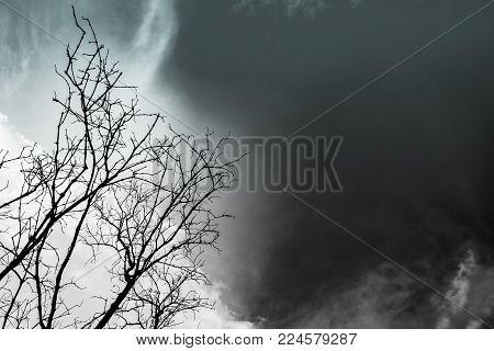 Silhouette dead tree on dark dramatic sky background for scary or death. Hopeless or despair background concept.