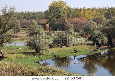 Colourfull countryside enviromnetal resort in swampy surrounding