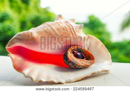 Collage, sea shell and seashell with hermit crab in the background of a tropical landscape