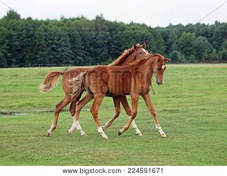 Two foals friendly communicate on a pasture