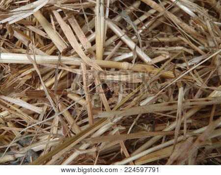 Close up of some hay livestock feed