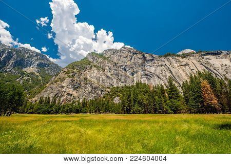Meadow in Yosemite National Park Valley. California, USA.