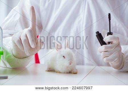 White rabbit in scientific lab experiment