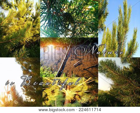 Summer collage with the pine trees through the sunset with written words Nature is Beautiful. Nature collage background. Sun light on the trees texture for design art