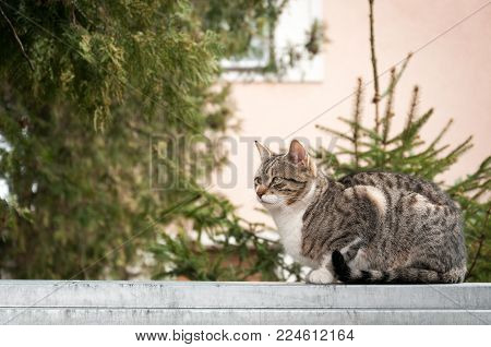 Beautiful young cat or kitty sitting on the garden wall