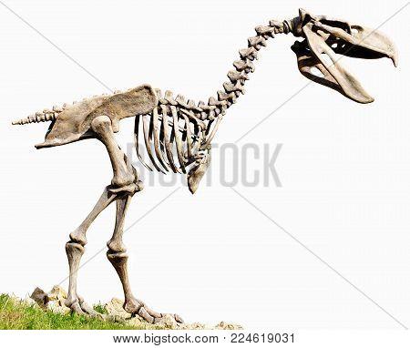 Phorusrhacidae carnivorous flightless birds replica fossil animals theme