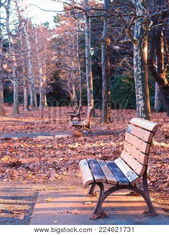 Emptiness of winter. Empty park benches in winter, lit by the late afternoon sun and surrounded by piles of fallen leaves.