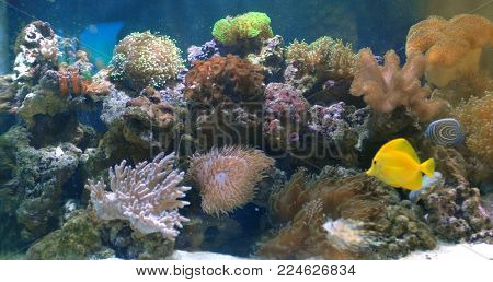 Corals and fish in beautifull sea marine aquarium