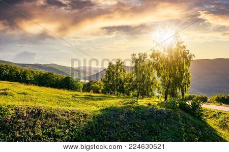 sun behind the trees on hillside. lovely nature scenery in mountainous area at sunset