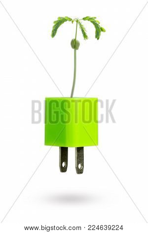 The baby tamarind grows out of the green usb power adapter charger on white background. The concept of global warming and green energy.