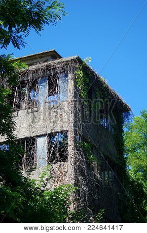 old industrial building abandoned and in degradation invaded by climbing plants
