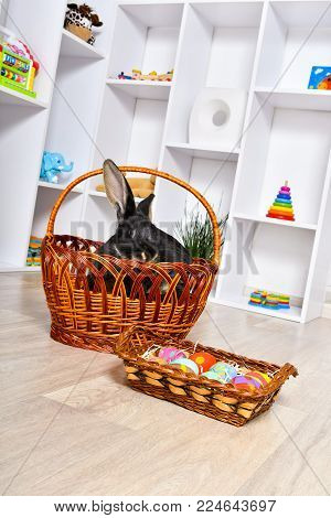 Easter bunny sitting in a basket in the playroom