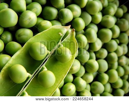 vibrant green image of top view macro closeup of an opened green peas pod with peas placed on top diagonally at bottom left corner with a collection of fresh shelled green peas in the background