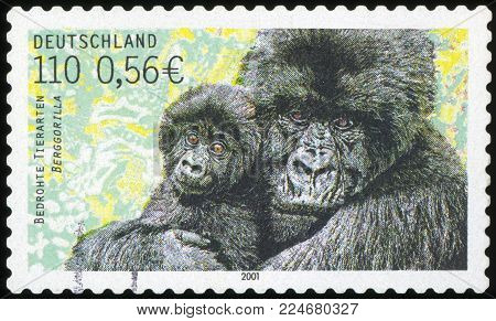 GERMANY - CIRCA 2001: stamp printed in Germany, shows Mountain gorilla, circa 2001